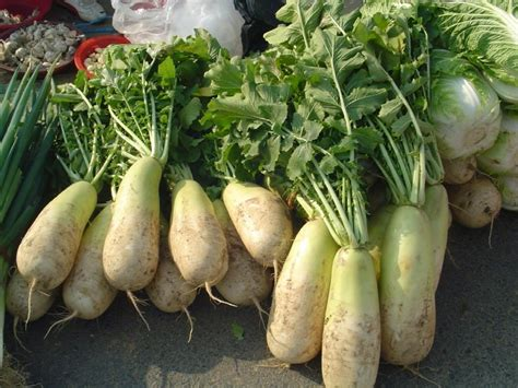 what is radish korean radish wikipedia