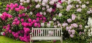 Meerrettich Blüht Was Tun : dein rhododendron bl ht nicht das kannst du tun ~ Lizthompson.info Haus und Dekorationen