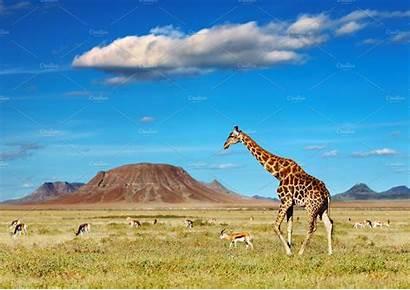 Savanna African Animal Creative Market
