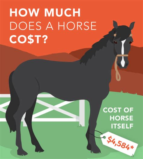cost horse much does horseclicks average far travel worth colorado compiled ads months placed