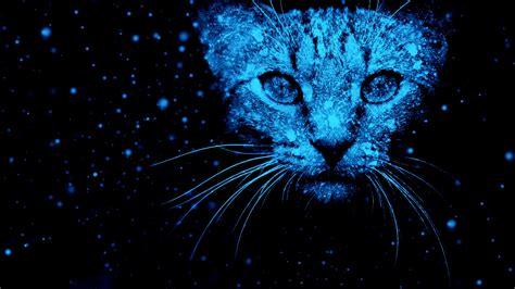 wallpaper cat snow neon blue hd creative graphics
