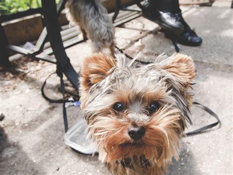 dog friendly  york parks