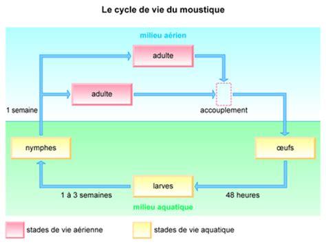 le cycle de vie du moustique base documentaire en
