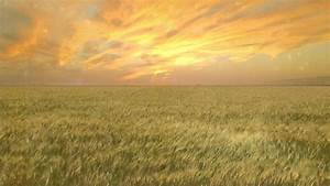 Wheat Field - Free Creative Commons particle motion ...