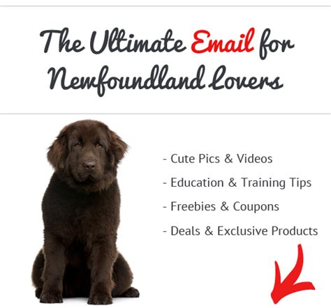 Do Newfoundlands Shed Year by How Bad Do Newfoundlands Shed Advice From Real