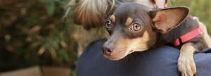 Labelle Foundation  U2013 Los Angeles Foster Based Animal