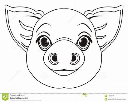 Pig Head Coloring Schweins Testa Maiale Coloritura