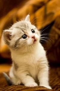 Surprised Kitten - Annie Many