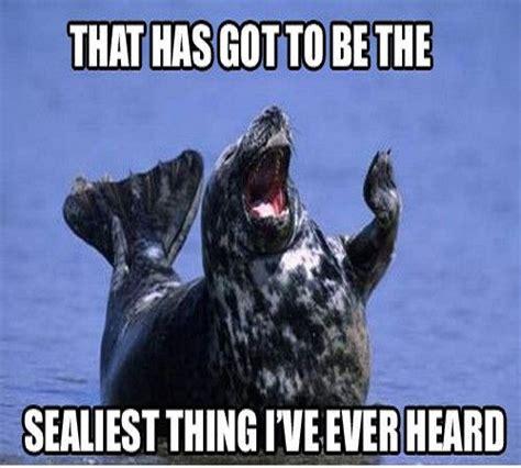 Seal Memes - seal meme