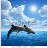 Bottlenose Dolphin Playing With A Ball | 450 x 470 jpeg 49kB