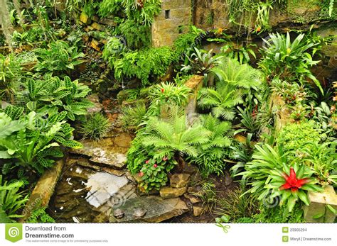 green plants for garden tropical garden green plants stock photo image of plants stone 23905294