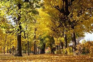 Bilder Herbst Kostenlos : herbst bl tter fallen lizenzfreie fotos bilder kostenlos herunterladen ohne anmeldung ~ Somuchworld.com Haus und Dekorationen