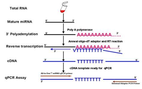 qpcr primer design qrt pcr reagent kits and validated primers genecopoeia