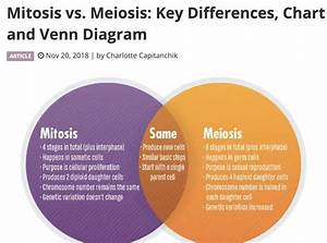 32 Venn Diagram Mitosis And Meiosis