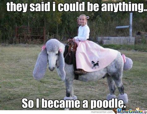 Standard Meme - standard poodle memes image memes at relatably com