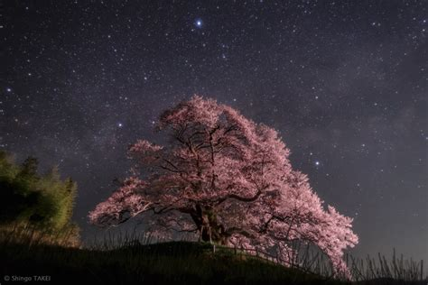 Japan Cherry Blossom Wallpaper Apod 2015 May 6 Summer Triangles Over Japan