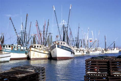 Buy A Boat In Key West by Florida Memory Shrimp Boats Docked The
