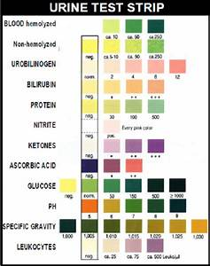 Dipstick Urine Test