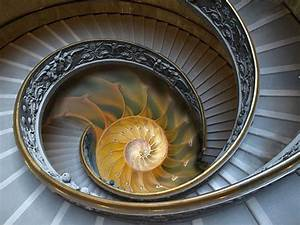 17 Best images about Fibonacci Sequence - Life is a spiral ...
