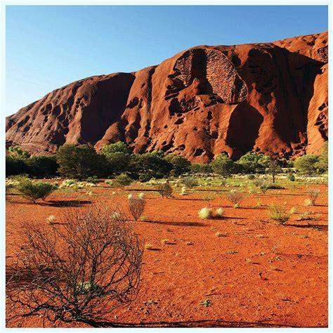 Desert Terrarium Background Desert Aquarium Terrarium Vinyl Background 20x12