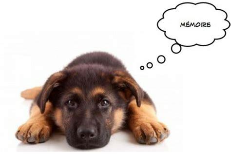 pat les animaux de compagnie m 233 moire et animaux de compagnie une association improbable mais qui fonctionne memoire net