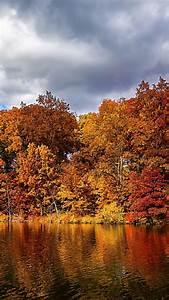 Wallpaper, Autumn, Forest, Lake, 5k, Nature, 15480