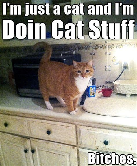 Cat Gym Meme - 12 best funny gym pics images on pinterest fitness humor funny gym and workout humor