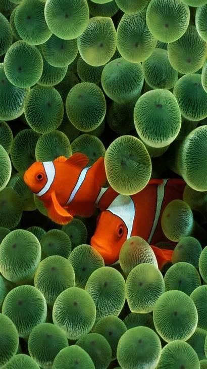 Iphone Retina Wallpapers Fish Pack Desktop Nature
