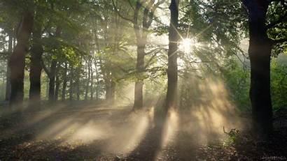 Giphy Cinemagraph Nature Living Forest Sunrise Cinemagraphs