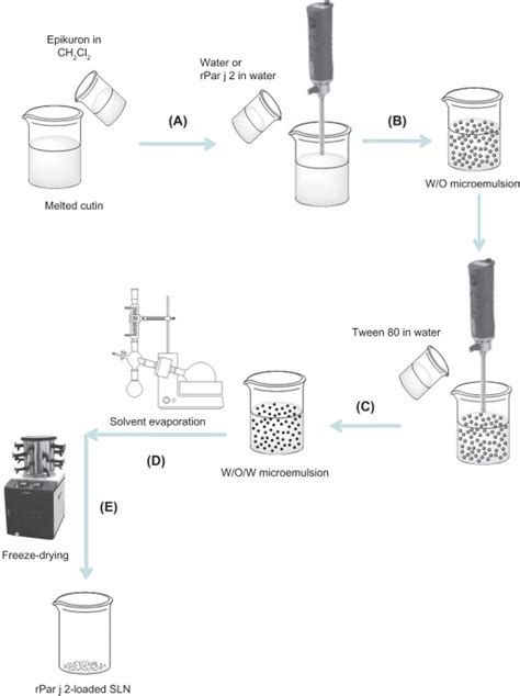 schematic diagram of solid lipid nanoparticle sln pre open i