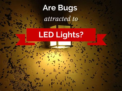 What Do Green Porch Lights by Do Led Lights Attract Bugs 1000bulbs