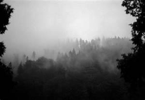 Schwarz Weiß Kontrast : schwarz wei wald 1 foto bild natur landschaften youth bilder auf fotocommunity ~ Frokenaadalensverden.com Haus und Dekorationen
