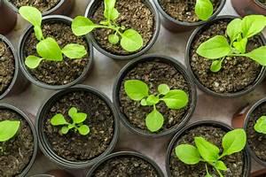 Gartenhibiskus Vermehren Stecklinge : petunien vermehren so gelingt 39 s ~ Lizthompson.info Haus und Dekorationen