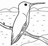 Hummingbird Coloring Sheets Printable Bird Template Simple Cool2bkids Templates Adult sketch template