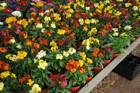 plante pour jardiniere exterieur plein soleil architecture design sncast