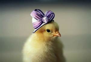 Baby Chicks with Hats