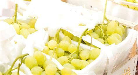 prezzo uva da tavola uva da tavola comincia la raccolta delle precoci in