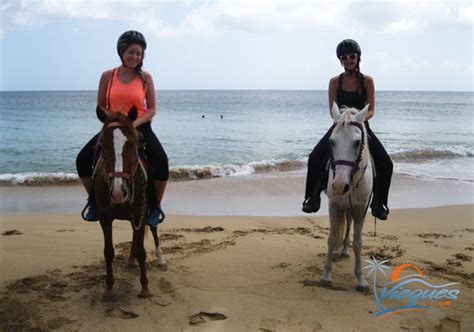 riding horseback puerto rico horse vieques horses places tropical horsing around island