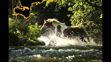 Schöne Pferde Rassen - YouTube