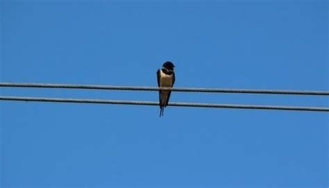 how to get rid of barn swallows on porch how to get rid of barn swallows on porch howgetrid net