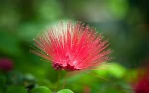 Natural Flower Picture for Wallpaper - WallpaperSafari