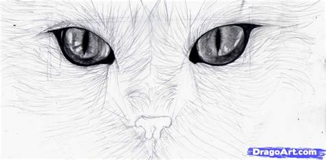How To Draw Cat Eyes Step By Pets Animals Free Online