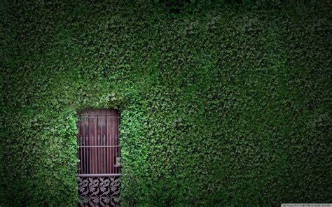 green wall ultra hd desktop background wallpaper