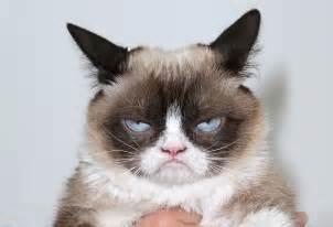 what of cat is grumpy cat goodbye grumpy cat hello lil bub