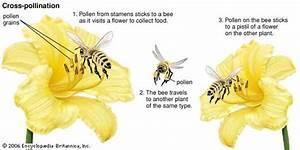 Flower  Plant Anatomy