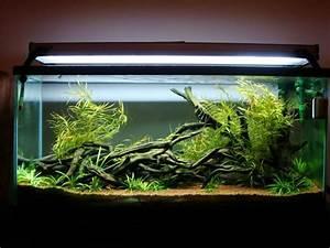 L Form Aquarium : 17 best images about aquascaped tanks on pinterest underwater artificial plants and tropical fish ~ Sanjose-hotels-ca.com Haus und Dekorationen