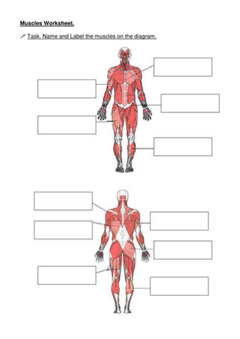 Muscles  Name The Muscle By Becksarmstrong  Teaching Resources Tes