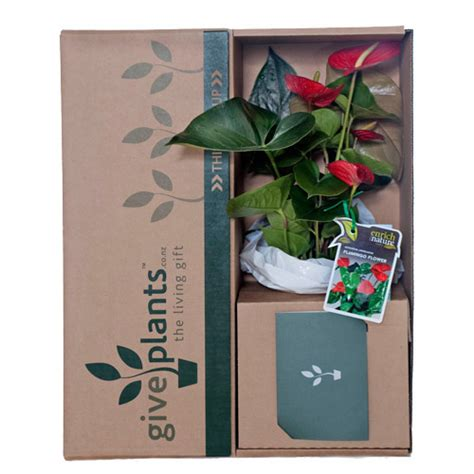 T Gifts For Bereavement  Ee  Gift Ee   Ftempo