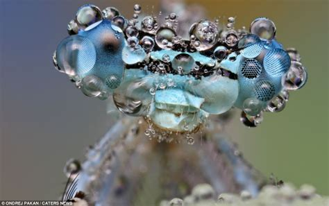 bugs amazing  show microscopic insects coping