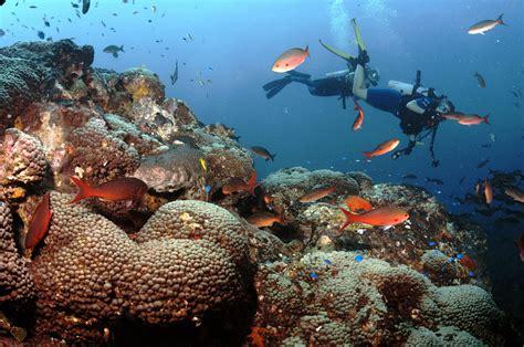 flower gardens diving scuba diving bazaruto island bazaruto archipelago